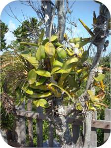 Jardin Botanico - orchids